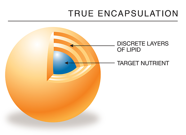 Encapsulated mineral diagram