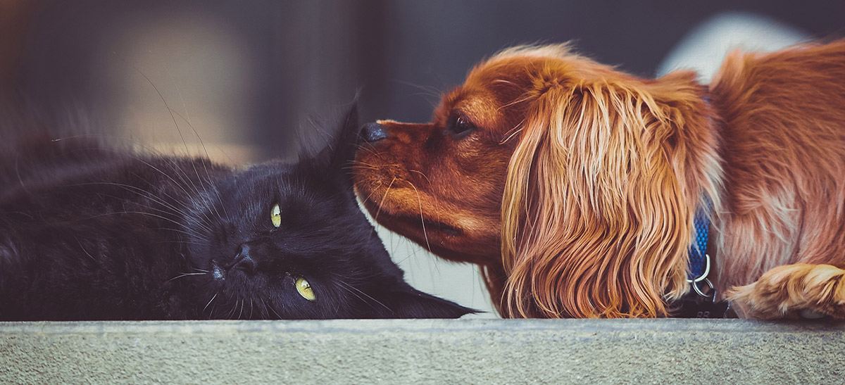 Pet Food Institute also advocates for all-around pet health to pet owners