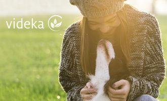 090519_videka_lead