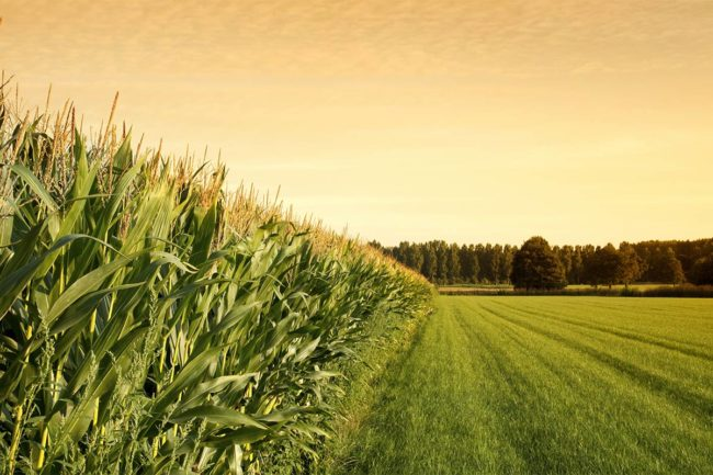 Sustainable Agriculture Summit set in November for agriculture industry