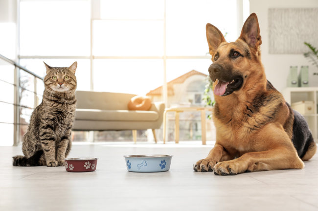 Two European pet food agencies debunk myths about carbohydrates in pet nutrition with new report