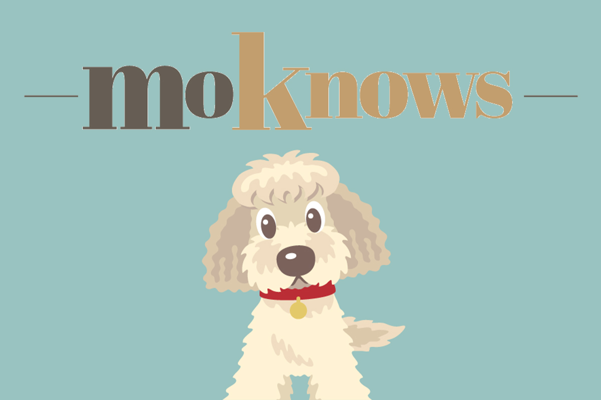 MoKnows.com