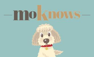 103019_moknows-launch_lead