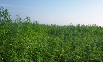 103019_us-hemp-production-program_lead