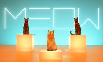 111319_meow-mix-remixes_lead