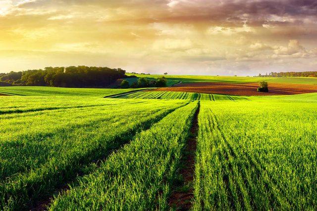 122019_green-plains-novozymes_lead