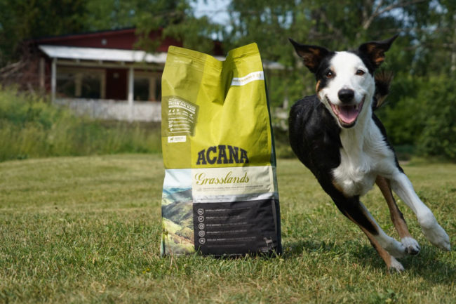 Maker of ACANA and ORIJEN pet foods wins Kentucky governor's award for trade