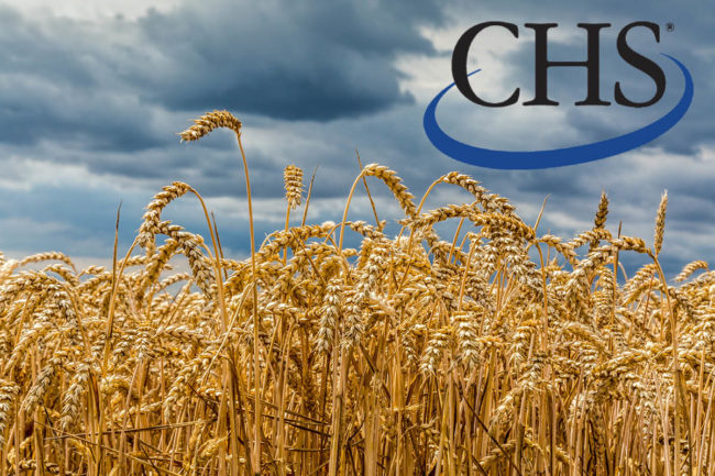 Wheat field with CHS logo