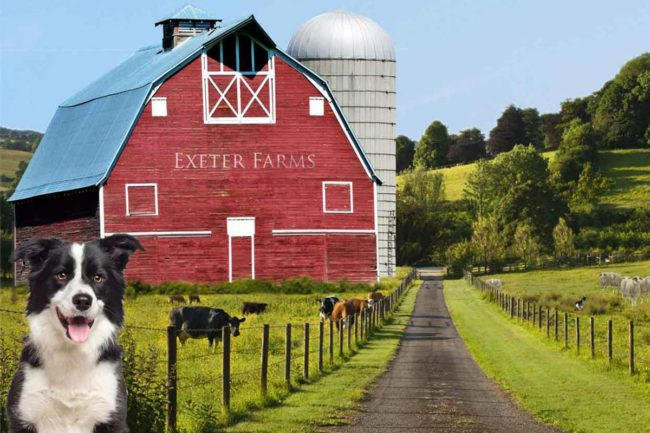 Exeter Farms, Phoenix Imports dog treat brand