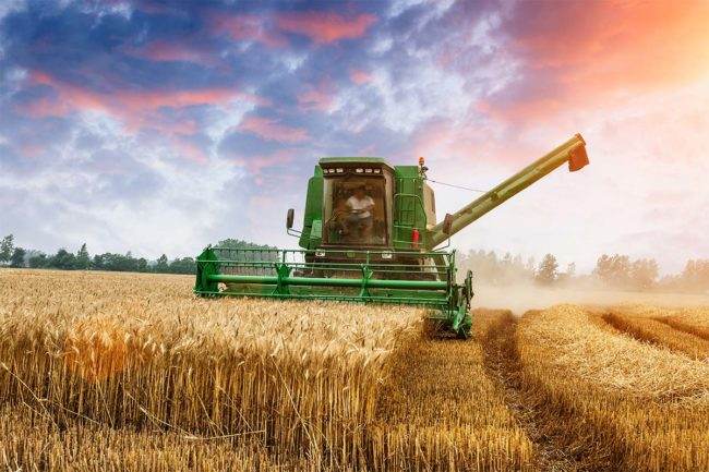 Tractor on wheat farm (©STOCKR - STOCK.ADOBE.COM)