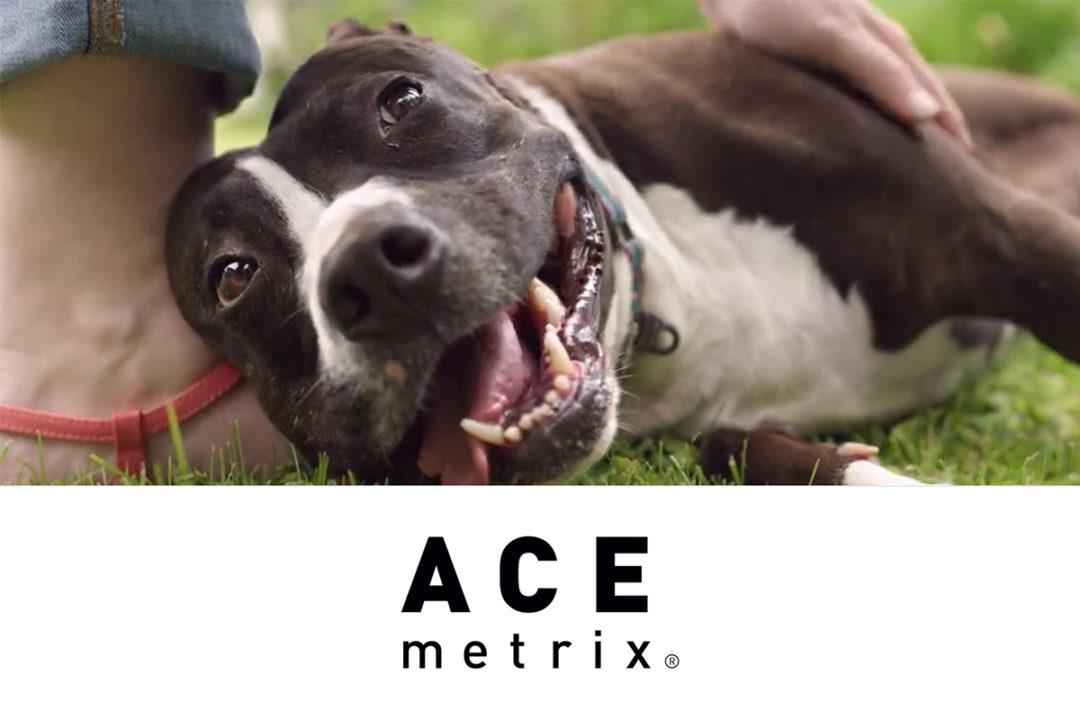 "Clip from Freshpet's ""Story of Princess"" video advertisement, Ace Metrix logo"