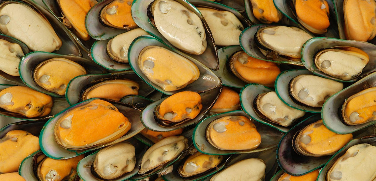 reen Source Organics Green Lipped Mussels
