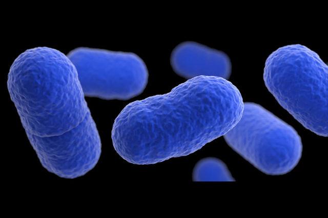 Lysteria-monocytogenes