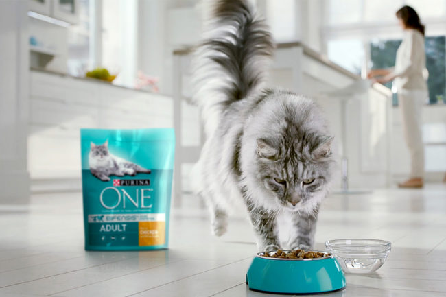 Purina ONE cat food and cat