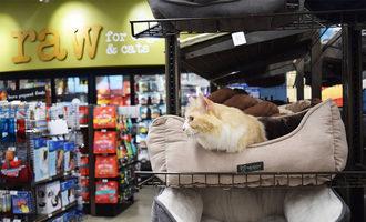 Pet-food-express-web