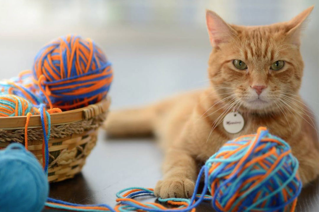 Morris, Smucker's 9Lives spokes-cat