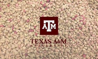 Tamu-pet-food_treat-2019