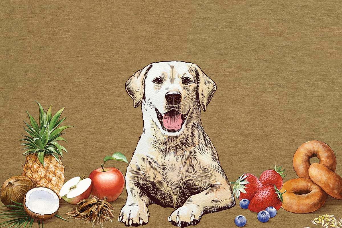 The Pound Bakery's Paws Barkery brand art