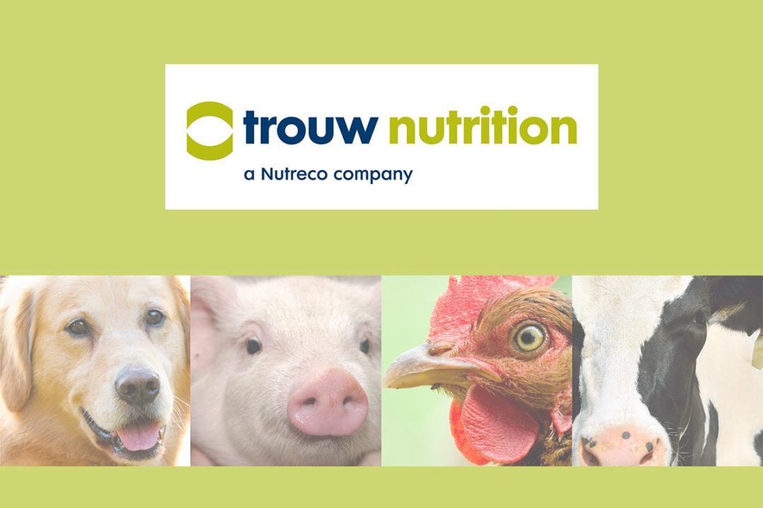 Trouw Nutrition logo and collage of animals (dog, pig, chicken and cow) on lime green background