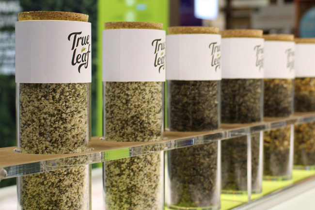 True Leaf hemp seeds