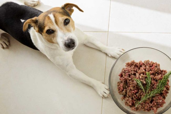 Dog with raw pet food in bowl