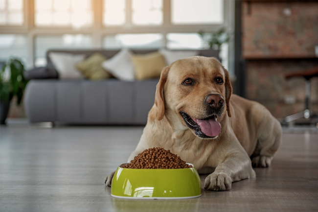 Dog sitting on floor in front of food bowl (©STOCKR - STOCK.ADOBE.COM)