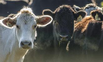 Us japan beef trade lead
